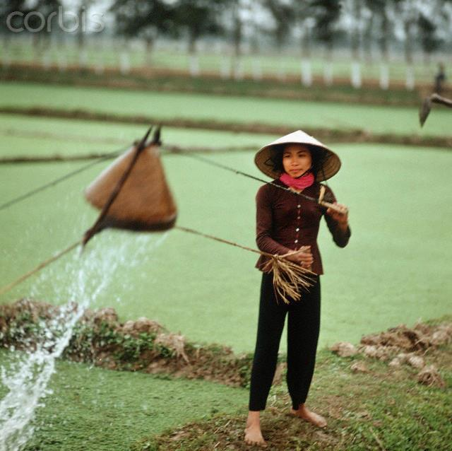 01 Mar 1973, Vietnam --- A Vietnamese woman with straw hat waters a rice field with an ordinary device in the province Nam Ha in North Vietnam, photographed in March 1973. Only a few weeks before, the peace agreement was signed on the 27th of January in 1973 in Paris and the war against North Vietnam ended. The United States of America flew about 2,000 air attacks on cities and targets in North Vietnam during the